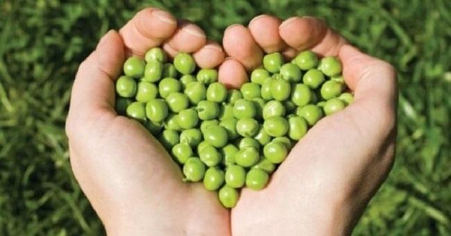 Đậu hà lan tốt cho tim mạch
